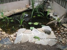 DIY BackYard Turtle Pond Designs Ideas A pond could possibly be built with cement to create a visually appealing pond shape which will be durable over the future. The pre-formed pond is most likely best for… Continue Reading → Backyard Aquaponics, Ponds Backyard, Patio Pond, Aquaponics Plants, Turtle Homes, Turtle Habitat, Small Turtles, Water Turtles, Turtle Pond