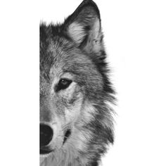 Wolf Art Print Painting Wolves Timber Woods Gray Brown Animals Nature... ❤ liked on Polyvore featuring home, home decor, wall art, animals, backgrounds, detail, embellishment, canvas painting, wildlife paintings and wood painting