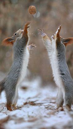 Mine! I got it! .....No! Mine! ....