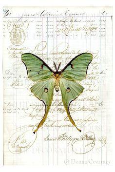 Luna Moth Art Print on Antique Ledger Book Page by TheDecoratedHouse Stencil, Art Papillon, Image Blog, Etiquette Vintage, Butterfly Art, Green Butterfly, Butterfly Background, Beautiful Butterflies, Medium Art
