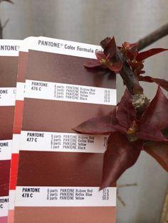 PMS Colour Matching - 476-478C Pantone Black, Pms Colour, Colours