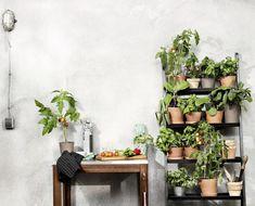 My home is my garden: die Kräuter- und Gemüseecke zu Hause