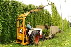 SPECIAL REPORT: Farming for Beer, Northern Michigan's Growing Hops Industry