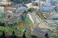 Terrace_field_yunnan_china by K Chen, via Flickr