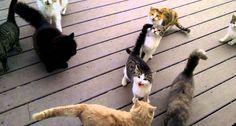O Que Acontece Quando Inúmeros Gatos Querem Ser Alimentados