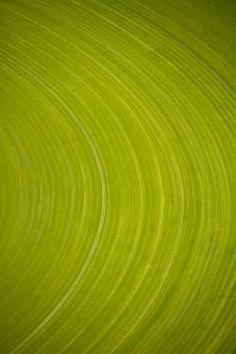 "Saatchi Art Artist Nikosono  o; Photography, ""«Green circle near Yangedi South Road, South Hopeland» by Nikosono"" #art"