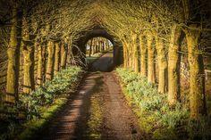 Road by Rick McEvoy - Photo 191796723 / 500px