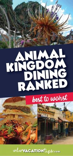 There are hundreds of options when it comes to eating at Disney World and we know it can be stressful. In order to help you plan a stress-free trip, we have put together a list of what we think each Animal Kingdom restaurant ranks and why! So let's jump right on in, here is our list of Animal Kingdom dining ranked.