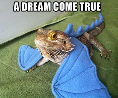 I need wings for my bearded dragon!