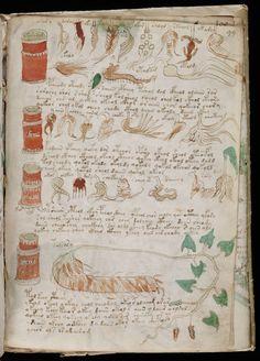 #VoynichManuscript | #CipherManuscript | Page 99 (1) | Original Pin Cormael Lia http://www.pinterest.com/cormaellia/voynich-manuscript/