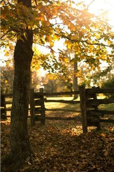 fall feelings--- cold toes, warm sweaters, crunchy leaves, eating chili, drinking tea/hot chocolate, baking apple pies, jumping in leave piles, pumpkin carving, the smell of the crisp breeze, new fashions, berry colored lipstick, beanies, boots, socks, cuddling, candles, the smell of cinnamon.