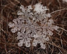 Close up of a snowflake Veja fotos incríveis de flocos de neve de perto - Superinteressante