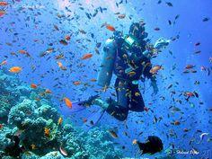 Jackson Reef, Sharm