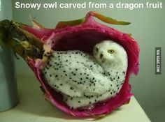 Snowly owl carved from a dragon fruit.