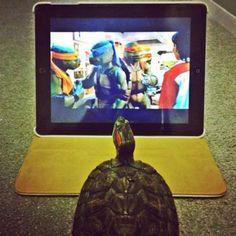 Teenage Mutant Ninja Turtle wannabe...