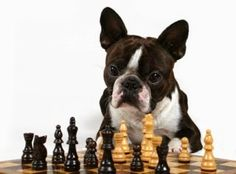 The Pet Net: Mental Exercises For Dogs