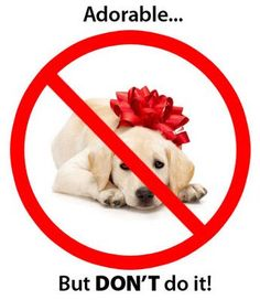 Don't give pets as presents