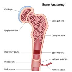 Replace the bone marrow when a high dose of chemotherapy or radiation is given to treat a malignancy and than it is restored for its normal function. This procedure may be done for diseases such as Lymphoma, Neuroblastoma and Breast Cancer.