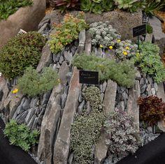 Striking alpine rock garden stand at Chelsea Flower Show 2016