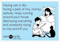 True. Cats are assholes