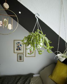 Hang plants from the ceiling