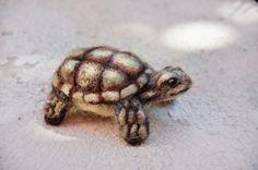 Needle Felted Felting Baby #Sulcata #Tortoise Hatchling Turtle Wool Miniature Art