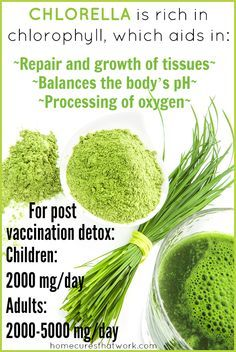 This powerful green food, micro-algae is very small in size. Its small size and molecular structure make it excellent at detoxification. Chlorella bonds to metals and chemicals, removing them safely out of the body. This makes chlorella a dynamic choice for post-vaccine detoxification. It safely and effectively bonds to heavy metals and chemical residues that are left behind in the body after vaccination. #chlorella #vaccine #detox