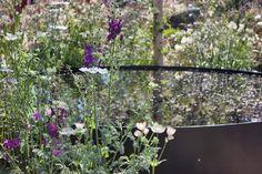 Vital-Earth-The-Night-Sky-Garden-David-Rich-&-Harry-Rich-RHS-Chelsea-Flower-Show-2014-Flowerona-6