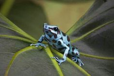 Beautiful exotic frog!