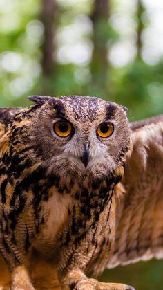 owl, bird, predator, flap, wing