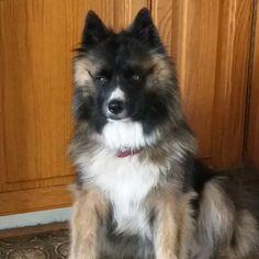 Fina Bella 🐶🙏 #bella  #2år #minhund  #blandras Dogs, Animals, Animales, Animaux, Pet Dogs, Doggies, Animal, Animais