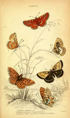 MI MALETA DE RECORTES: Láminas Antiguas con Mariposas