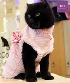 Catspia rózsaszín elegáns macska ruha