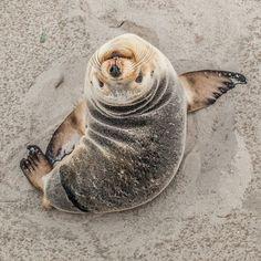 Seal. #animal #fauna