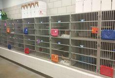 Teneri cuccioli Notizie: Un rifugio per animali in Texas è stato costretto ...