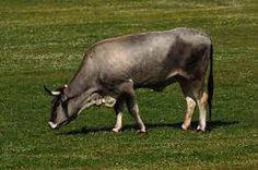Visit National park Brijuni - www.np-brijuni.hr