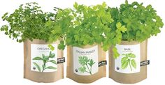 Unique container gardens for fresh herbs all year round! Grow these herbs on your kitchen windowsill or in just about any sunny spot indoors year-round. Conveniently grows right in the leak-proof bag. Makes a great gift. Includes: organic, heirloom seed, certified organic soil, certified organic coconut husks for drainage, easy instructions. Simply re-pot the plant by removing it from the bag. #MenusAndMusic