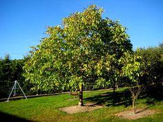 Pecan Tree Garden Landscaping