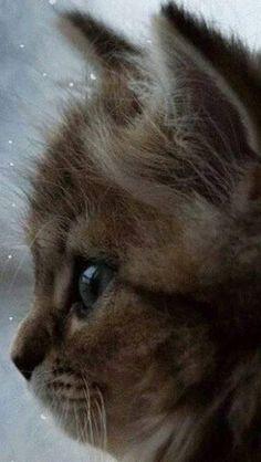 Sweet baby cat!
