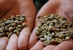 25 Best Pure Green Coffee Beans Images Pure Green Coffee Bean