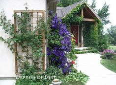 Gallery of Clematis