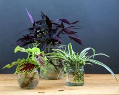 Grow Beautiful Indoor Plants In Glass Bottles - A Piece Of Rainbow-The easiest and most foolproof way to grow indoor plants in glass bottles and water. 10 beautiful plants for an easy-care indoor garden and clean air!