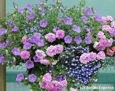 fleurs en pots pour balcon et terrasse my little jardin my little jardin des fleurs et des. Black Bedroom Furniture Sets. Home Design Ideas