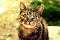 cat 16 by deejaymiky91 on DeviantArt