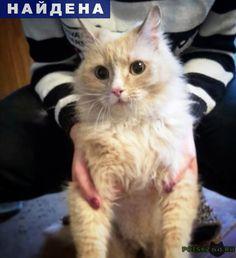 Найдена кошка вроде кот г.Пермь http://poiskzoo.ru/board/read32088.html  POISKZOO.RU/32088 Найден кот кремового цвета, немного с рыжа. Белые пятна на пузике, лапках и на носу. Найден у дома Д. Давыдова, ..! Всю ночь орал (по словам соседей), хозяинов с помощью обхода по квартирам подъезда найти не удалось! Было похоже, что просто выпал из окна.   РЕПОСТ! @POISKZOO2 #POISKZOO.RU #Найдена #кошка #Найдена_кошка #НайденаКошка #Пермь