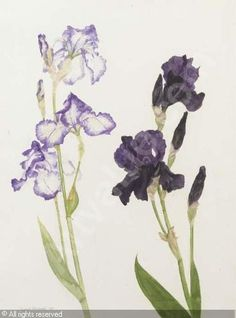 Elizabeth Blackadder- water colour artist, could use painting silks