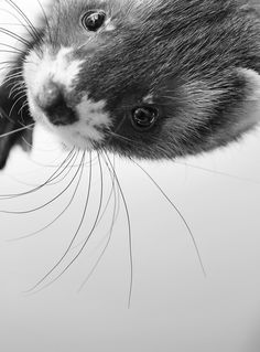 but yall look how cute this ferret is