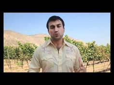 Here is a great clip on the MAIPO VALLEY of Chile. Straight and to the point, this dashing sommelier provides the essential facts to know about the region. ENJOY!!!  MaipoAlto.mp4