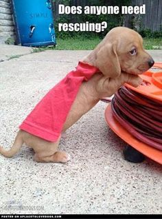 Does anyone need rescuing? Superdog is on the way! :)