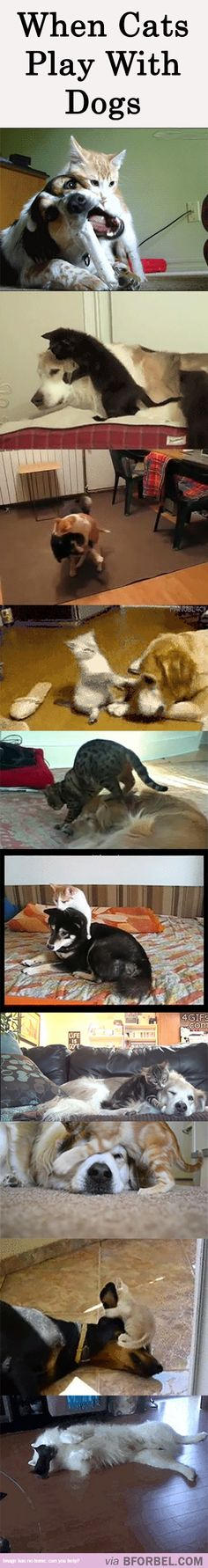 10 Cats And Dogs Happily Playing Together…